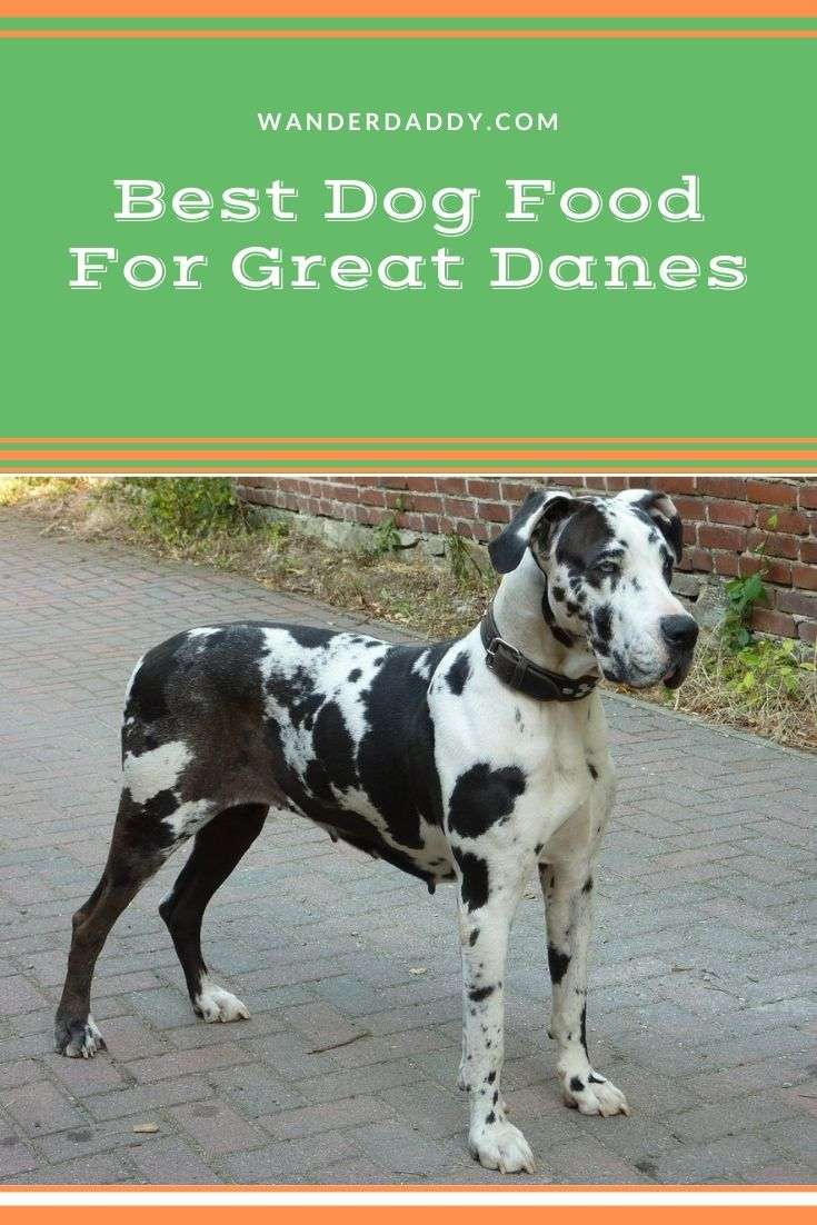 Best Dog Food For Great Danes In 2020 (Puppy and Adults ...