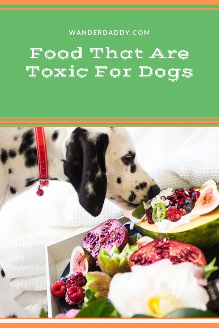 """What Foods Are Toxic For Dogs"""""""