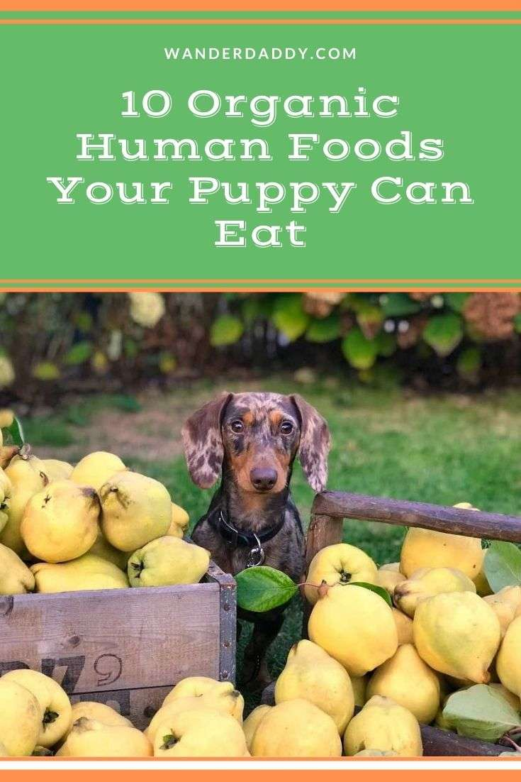10 Organic Human Foods Your Puppy Can Eat
