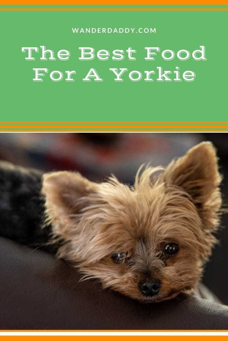 The Best Food For A Yorkie
