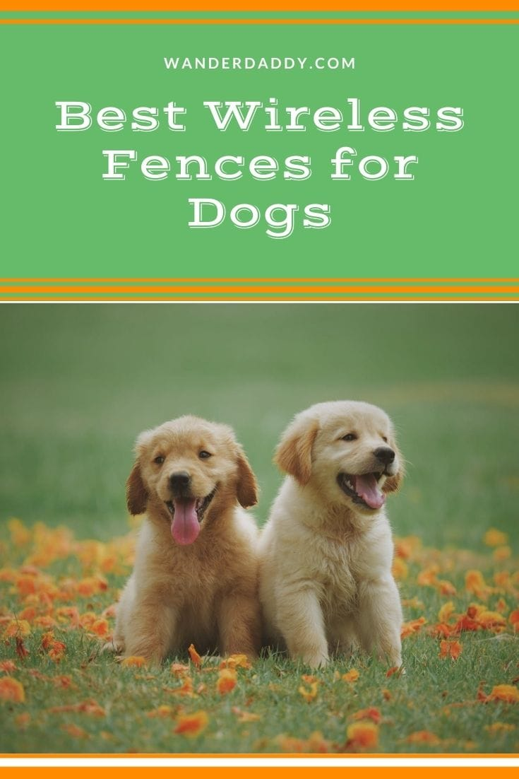 Best Wireless Fences for Dogs