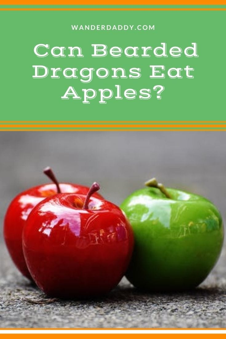 Can Bearded Dragons Eat Apples